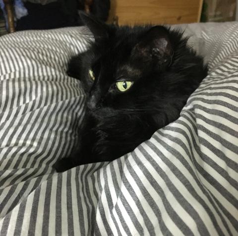 Meiko_Cat